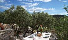Island Brac theme stay - picking olives